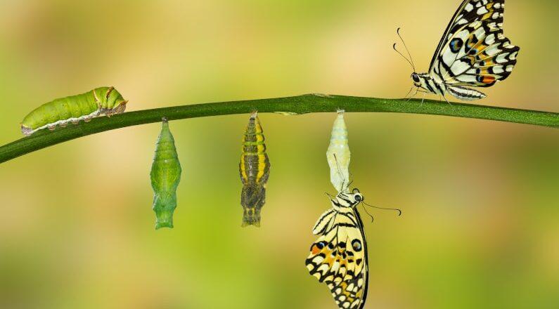 Formation démarche et outils pour accompagner les équipes dans le changement